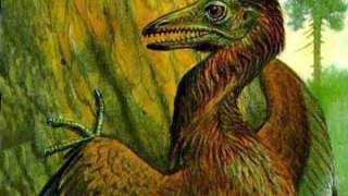 Найдены окаменелости птицы, возраст которой более 90 млн лет