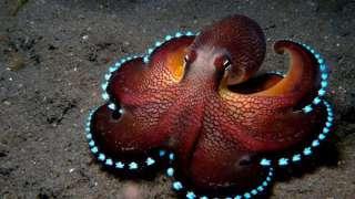 По мнению ученых, осьминоги попали на Землю из космоса