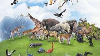 К концу века половина животных исчезнет