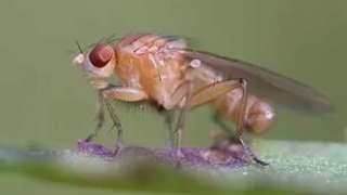 Ученые обнаружили изменения в геноме насекомых, побывавших в космосе