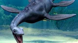 Учеными найдены останки динозавра, который проживал 127 млн лет назад