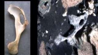 Марсоход «Curiosity» обнаружил на Красной планете окаменелые кости