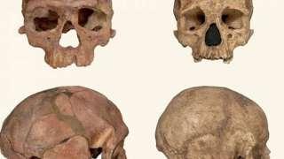 Человек разумный оказался старше на 100 тыс. лет