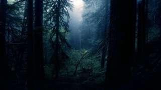 Уфологи получили очередной снимок призрака в Рэндлшемском лесу