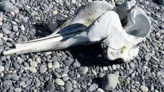 В Китае нашли новый вид крылатых динозавров с гребнем на голове