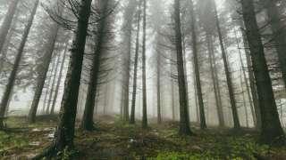 Ученые нашли «тайный сад» с плотоядными растениями и вымирающими животными