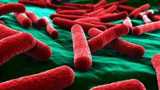 На МКС вырастили устойчивые к антибиотикам бактерии