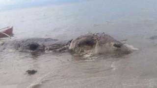 На побережье Филиппин обнаружена туша неизвестного животного