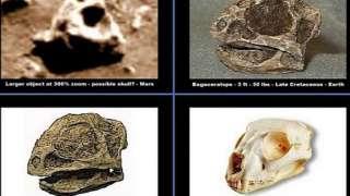 На Марсе удалось обнаружить останки динозавров