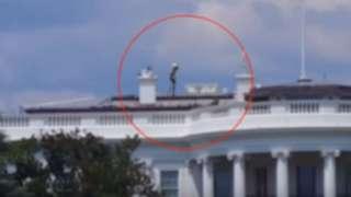 """На крыше Белого Дома заметили """"пришельца"""""""