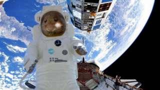 Космический полёт мышей покажут в режиме «online»