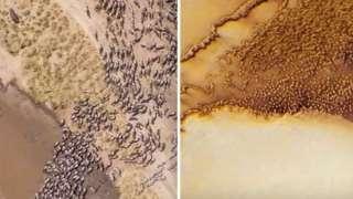 На Марсе обнаружили что-то похожее на стадо животных
