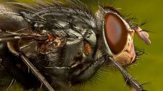 Учёные отправили мух и ос в космос на месяц