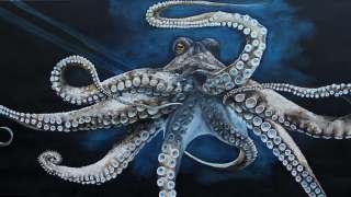 Ученые отреагировали на теорию инопланетного происхождения осьминогов
