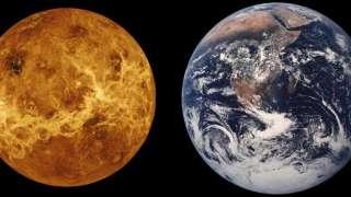 Учёные рассказали, какие обитающие на Земле существа могли прибыть с Венеры