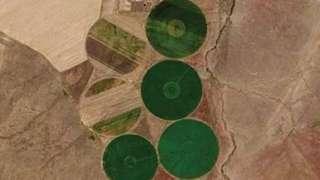 В Казахстане обнаружили гигантские круги на полях