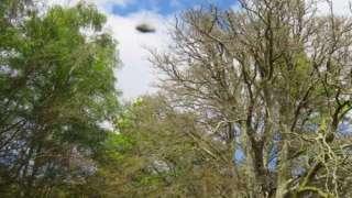 """Турист сфотографировал в британских лесах настоящую """"летающую тарелку"""""""