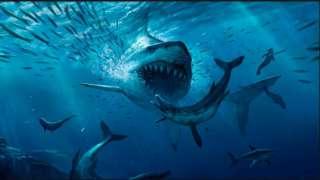 Падение астероида спровоцировало вымирание гигантских акул мелового периода