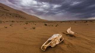 В пустыне Гоби нашли сразу четыре метеорита