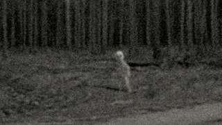 Фото с настоящим пришельцем появилось в Сети