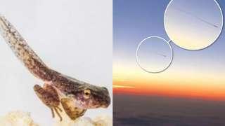 Странное «существо», появившееся возле самолёта, попало на видео и перепугало пассажиров