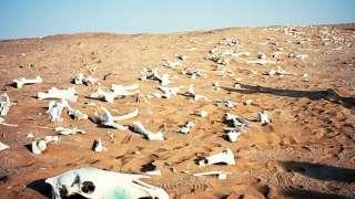 Ученые пророчат Земле превратиться в безжизненную пустыню
