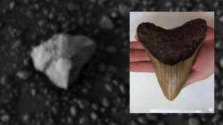Скотт Уоринг утверждает, что нашёл на Марсе зуб гигантского инопланетного существа