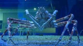 «Гигантский синий паук», найденный на Марсе, удивил учёных, которые объяснили его происхождение