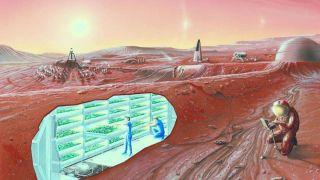 Почву Марса воссоздали для эксперимента по выращиванию растений